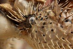 Αποξηραμένα ψάρια καπνιστών Στοκ Εικόνες