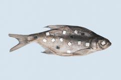 Αποξηραμένα ψάρια με τα αντανακλημένα τετράγωνα που απομονώνονται στο μπλε υπόβαθρο, το έργο τέχνης Στοκ Φωτογραφίες