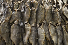 αποξηραμένα ψάρια ξηρά ψάρια Ξηρό υπόβαθρο ψαριών Στοκ Εικόνες