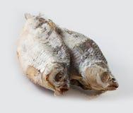αποξηραμένα ψάρια παστά Στοκ Φωτογραφία