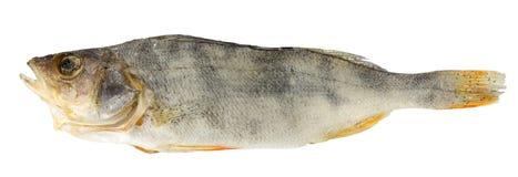 Αποξηραμένα ψάρια που απομονώνονται σε ένα άσπρο υπόβαθρο Στοκ φωτογραφία με δικαίωμα ελεύθερης χρήσης