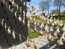 Αποξηραμένα ψάρια σε μια ηλιόλουστη ημέρα Στοκ φωτογραφία με δικαίωμα ελεύθερης χρήσης