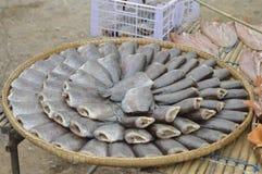 Αποξηραμένα ψάρια στην αγορά τροφίμων οδών Στοκ εικόνα με δικαίωμα ελεύθερης χρήσης
