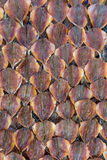 Αποξηραμένα ψάρια Ταϊλάνδη Στοκ Φωτογραφία