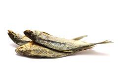 Αποξηραμένα ψάρια Στοκ Εικόνα