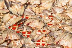 αποξηραμένα ψάρια στοκ εικόνες με δικαίωμα ελεύθερης χρήσης