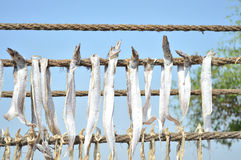 Αποξηραμένα ψάρια bumla - ψάρια παπιών της Βομβάη Στοκ Εικόνα