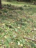 Απορρίματα δέντρων και κλάδων που προκαλούνται από τον τυφώνα Φλωρεντία στοκ εικόνες