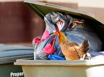 απορρίμματα κοτών εμπορευματοκιβωτίων Στοκ Φωτογραφία