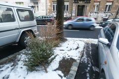 Απορριμμένα δέντρα πεύκων στοκ εικόνες