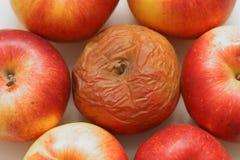αποστροφή μήλων σάπια Στοκ εικόνες με δικαίωμα ελεύθερης χρήσης