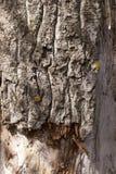 Αποσυντιθειμένος κορμός δέντρων Στοκ φωτογραφία με δικαίωμα ελεύθερης χρήσης