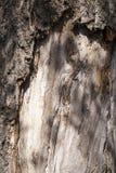 Αποσυντιθειμένος κορμός δέντρων Στοκ Φωτογραφίες