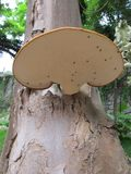 Αποσυντιθειμένος μύκητες Στοκ εικόνες με δικαίωμα ελεύθερης χρήσης