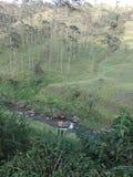 Αποτελείται από τα δέντρα που χρησιμοποιούνται για την ξυλεία στοκ εικόνες με δικαίωμα ελεύθερης χρήσης