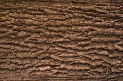 Αποτυπωμένη σε ανάγλυφο σύσταση του καφετιού φλοιού ενός δέντρου με το πράσινο βρύο και της μπλε λειχήνας σε το Στοκ Φωτογραφία