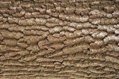 Αποτυπωμένη σε ανάγλυφο σύσταση του καφετιού φλοιού ενός δέντρου με το πράσινο βρύο και της μπλε λειχήνας σε το Στοκ Εικόνα