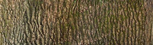 Αποτυπωμένη σε ανάγλυφο σύσταση του καφετιού φλοιού ενός δέντρου με το πράσινο βρύο και της λειχήνας σε το Στοκ φωτογραφίες με δικαίωμα ελεύθερης χρήσης