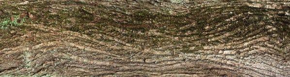 Αποτυπωμένη σε ανάγλυφο σύσταση του καφετιού φλοιού ενός δέντρου με το πράσινο βρύο και της λειχήνας σε το Στοκ εικόνες με δικαίωμα ελεύθερης χρήσης