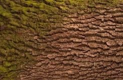 Αποτυπωμένη σε ανάγλυφο σύσταση του καφετιού φλοιού ενός δέντρου Στοκ εικόνες με δικαίωμα ελεύθερης χρήσης