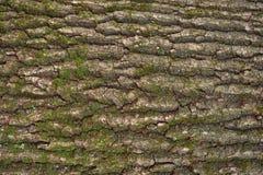 Αποτυπωμένη σε ανάγλυφο σύσταση του καφετιού φλοιού ενός δέντρου Στοκ Εικόνα