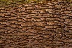 Αποτυπωμένη σε ανάγλυφο σύσταση του καφετιού φλοιού ενός δέντρου Στοκ Εικόνες