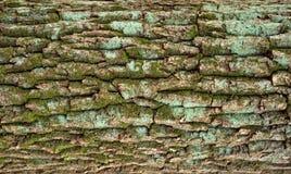 Αποτυπωμένη σε ανάγλυφο σύσταση του καφετιού φλοιού ενός δέντρου Στοκ εικόνα με δικαίωμα ελεύθερης χρήσης