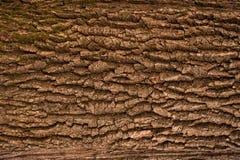 Αποτυπωμένη σε ανάγλυφο σύσταση του καφετιού φλοιού ενός δέντρου Στοκ φωτογραφία με δικαίωμα ελεύθερης χρήσης