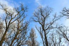Αποφυλλωμένα και άφυλλα δέντρα Στοκ Εικόνες