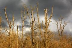 Αποφυλλωμένα και άφυλλα δέντρα Στοκ φωτογραφία με δικαίωμα ελεύθερης χρήσης