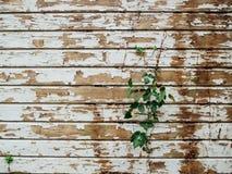 Αποφλοίωση χρωμάτων από ξύλινο να πλαισιώσει με την αμπελοκαλλιέργεια Στοκ Φωτογραφία