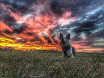 Αποφλοιώνοντας σκυλί στο ηλιοβασίλεμα Στοκ εικόνα με δικαίωμα ελεύθερης χρήσης