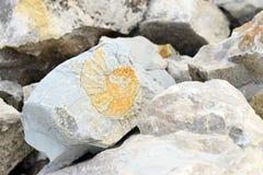 Απολίθωμα Amonite στον ασβεστόλιθο Στοκ Φωτογραφία