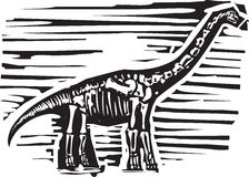 Απολίθωμα Apatosaurus απεικόνιση αποθεμάτων