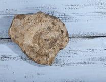 Απολίθωμα Nautilus στην πέτρα στο ξύλινο υπόβαθρο Στοκ φωτογραφία με δικαίωμα ελεύθερης χρήσης