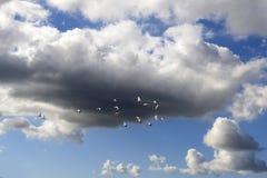 Αποδημητικά πτηνά Στοκ Εικόνα