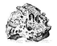 Απολιθωμένα φυτά, πέτρες και μεταλλεύματα, κρύσταλλα, προϊστορικά ζώα, αρχαιολογία ή παλαιοντολογία απολιθώματα τεμαχίων Στοκ φωτογραφία με δικαίωμα ελεύθερης χρήσης