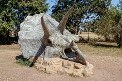 Απολιθωμένος σκελετός Triceratops πέρα από το φυσικό υπόβαθρο Στοκ φωτογραφία με δικαίωμα ελεύθερης χρήσης