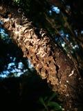 Απροσδιόριστος ανάπτυξη μανιταριών από τον ξύλινο στοκ εικόνα με δικαίωμα ελεύθερης χρήσης