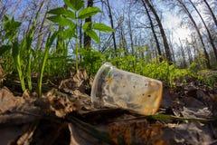 Απρόσεκτα ρίξτε μακριά το πλαστικό μπουκάλι στα απορρίματα φυλλώματος μια δασική πορεία στοκ φωτογραφία με δικαίωμα ελεύθερης χρήσης