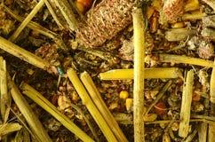 Απόβλητα και φλοιός καλαμποκιού καλαμπόκι Ινδός closeup Υπόβαθρο Η μακρο εικόνα μπορεί να χρησιμοποιηθεί ως υπόβαθρο Στοκ φωτογραφία με δικαίωμα ελεύθερης χρήσης