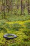 Απόβλητα στη φύση Στοκ Εικόνες
