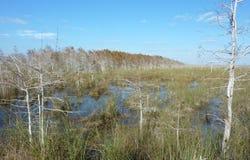 Απόγευμα Everglade Στοκ Εικόνες
