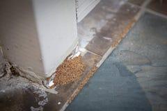 Απόδειξη της προσβολής τερμιτών στοκ φωτογραφία με δικαίωμα ελεύθερης χρήσης