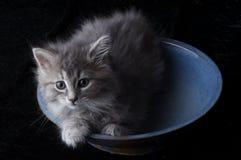 απόθεμα φωτογραφιών γατακιών Στοκ εικόνες με δικαίωμα ελεύθερης χρήσης