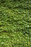 απόθεμα φωτογραφιών 2 κισ&sigma Στοκ φωτογραφία με δικαίωμα ελεύθερης χρήσης