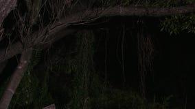 Απόκοσμα δέντρα και εγκαταστάσεις απόθεμα βίντεο