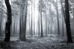 Δάσος bw Στοκ Φωτογραφία
