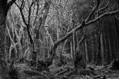 Απόκοσμη δασώδης περιοχή Στοκ φωτογραφία με δικαίωμα ελεύθερης χρήσης