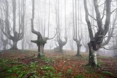 Απόκοσμο δάσος στοκ εικόνες με δικαίωμα ελεύθερης χρήσης
